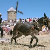 XI Fiesta de la molienda