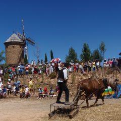 XII Fiesta de la Molienda en el Molino de Viento de Ocón