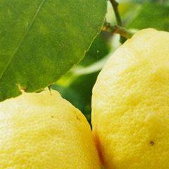 Lima limón Bistro