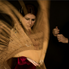 Flamenco Insights, by Merengue de Córdoba