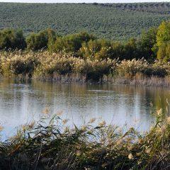 Paisajes con historia, dos nuevas rutas en Montilla y Moriles