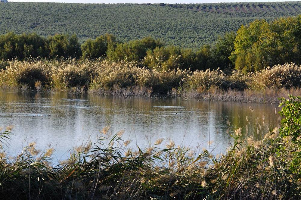 Rutas de Montilla y Moriles en Córdoba