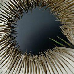 Exposición Exquisita Singularidad en May Arratia