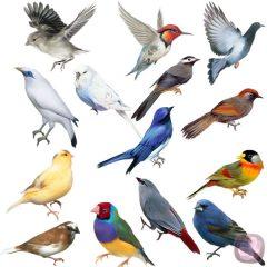 Martes ornitológicos en La Casa de la Ciencia