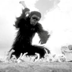Exposición 'El Mono Asesino' en el Museo de la Evolución Humana