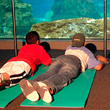 Dormir con tiburones en el L'Aquarium Barcelona