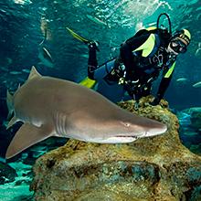 Sumérgete entre tiburones en el L'Aquarium Barcelona
