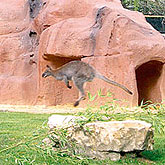 Ayers Rock en Zoo-Aquarium de Madrid