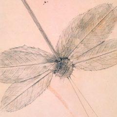 Max Ernst: historia natural en Museu Fundación Juan March en Baleares