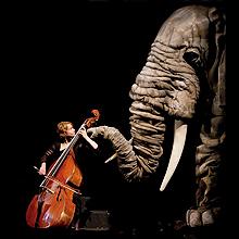 Soñando el Carnaval de los Animales en Gran Teatro en Córdoba