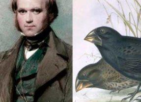 Darwin, una mirada que cambió el mundo en Museo Nacional de Ciencias Naturales en Madrid