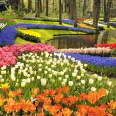 Siente más cerca la primavera, Jardines Botánicos del Mundo