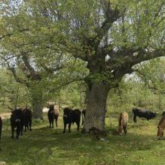 El proyecto de Paleolítico Vivo necesita tu ayuda: 'Salvemos los grandes herbívoros salvajes'