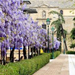 Farcama se celebrará en la ciudad de Toledo