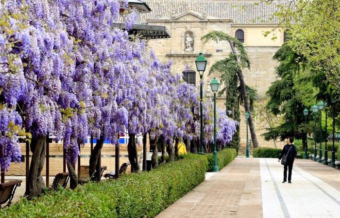 Farcama se traslada a la ciudad de Toledo