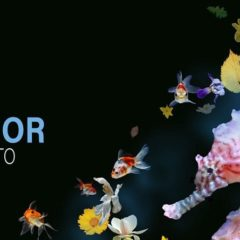 'Live Mar Menor' llega a Los Alcázares