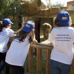 Campamentos de verano en el Zoo en Zoo-Aquarium de Madrid