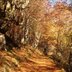 Descubre 9 rutas en Burgos para disfrutar del otoño en plena naturaleza
