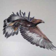 Iñaki Díez. Pájaros en la cabeza en Museo Nacional de Ciencias Naturales en Madrid