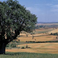 Excursión Ambiental: 'Camino de los Romanos' con Enrique del Rivero