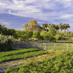 La Vía Verde de Murcia creará senderos, jardines, zonas verdes y un palmeral de 3.000km