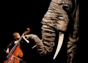 Soñando el carnaval de los animales en Teatro Principal en Valencia