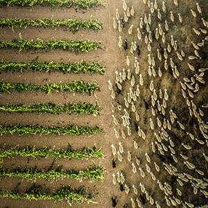 XXII Concurso Internacional de Fotografía El Rioja y los 5 Sentidos