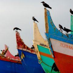 Fillos do océano, exposición de fotografía en Tui