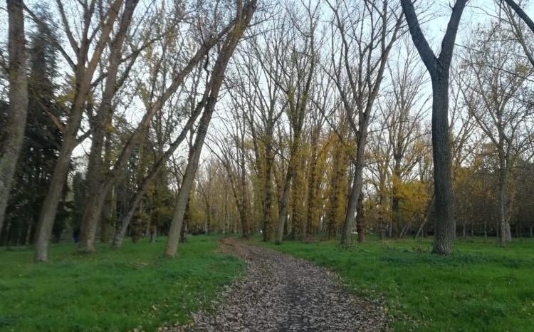 Paseo de Burgos en otoño