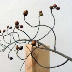 Dorothea von Elbe. El equilibrio natural en Rafael Ortiz en Sevilla