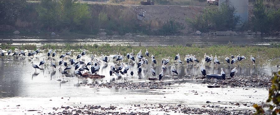 La Cartuja Baja entorno natural