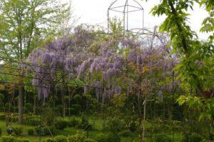 31 jardin botanico