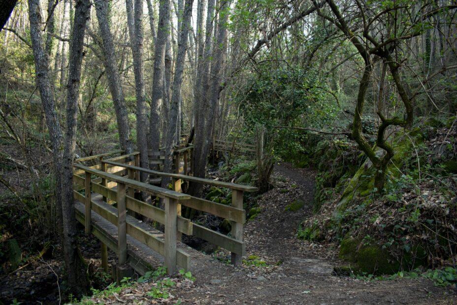 Bosque de los Espejos. Puente