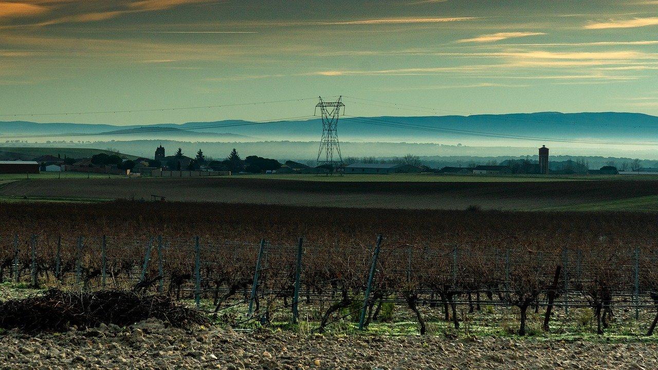 Campo de viñedo en Castilla y León