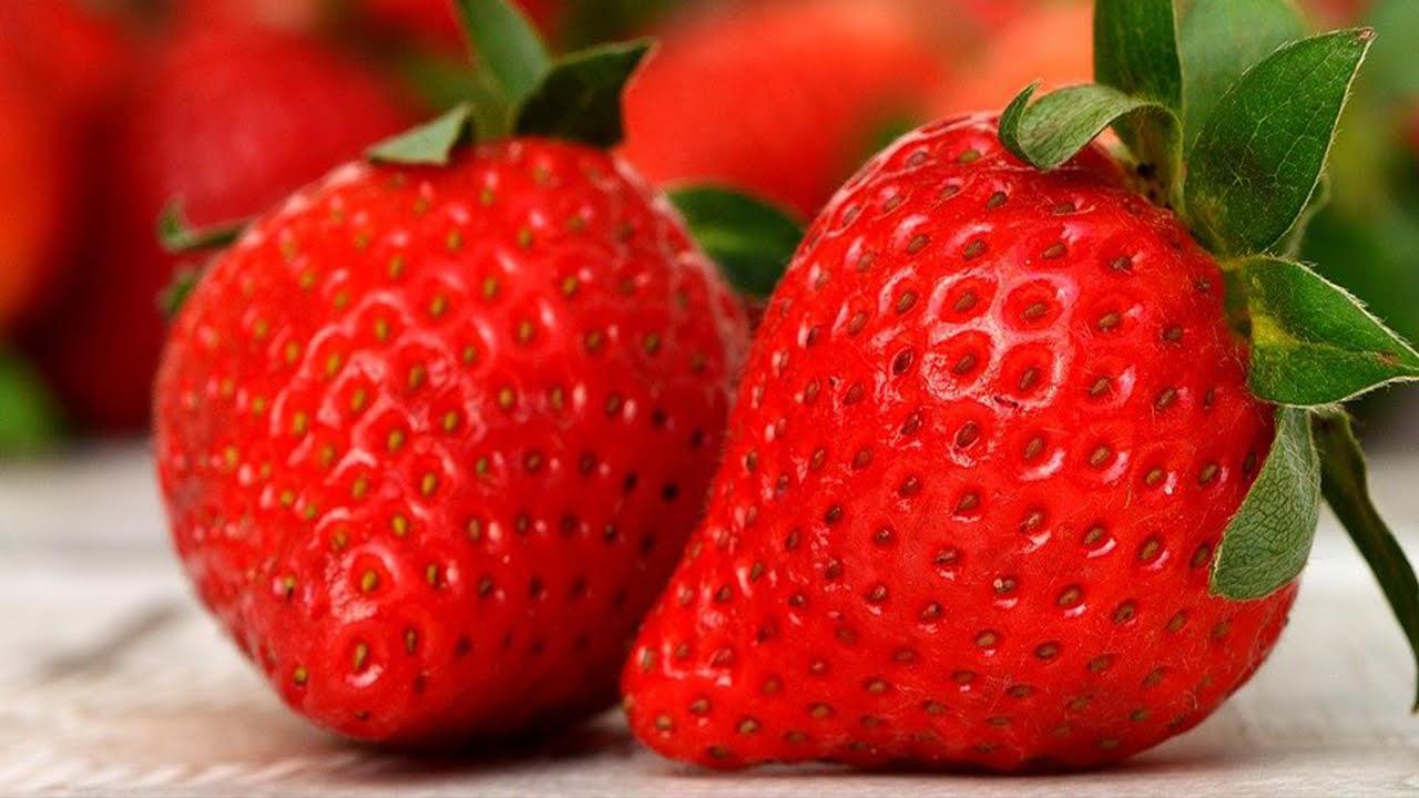 Las fresas ecológicas preferidas por los mejores chefs se cultivan en Madrid