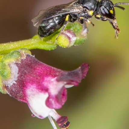 mas que abejas polinizadores y flores la vida en juego