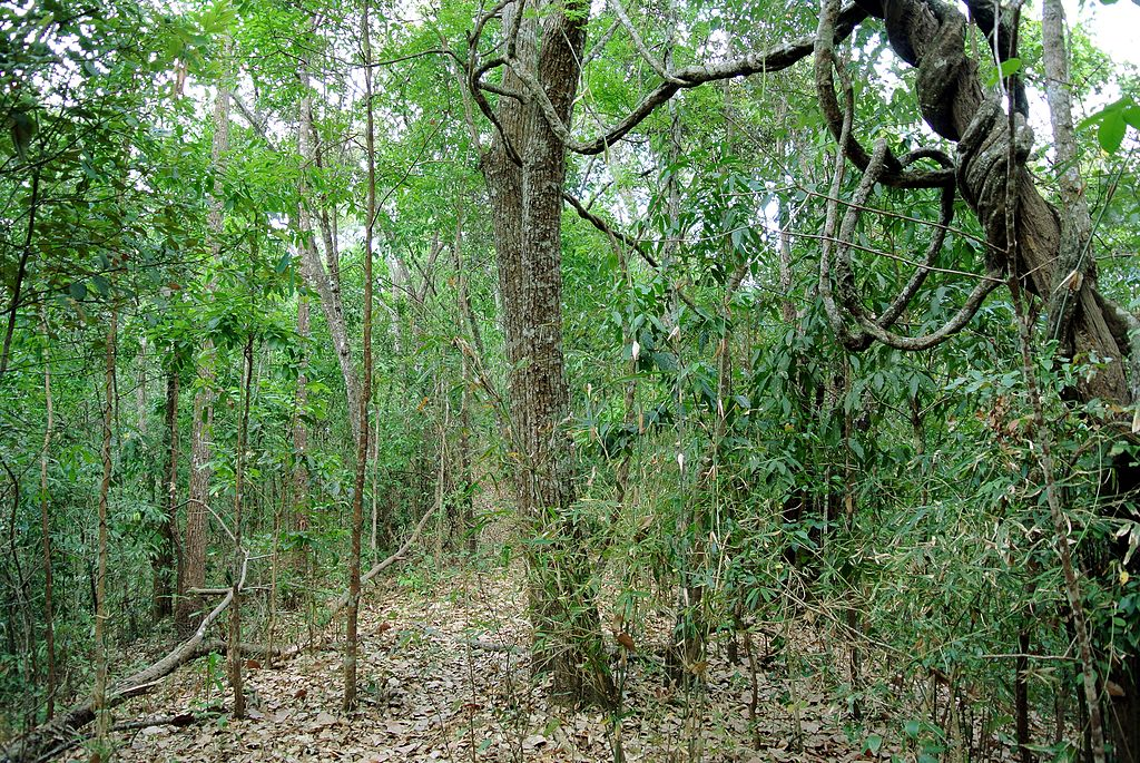 Bosques de Africa ecuatorial