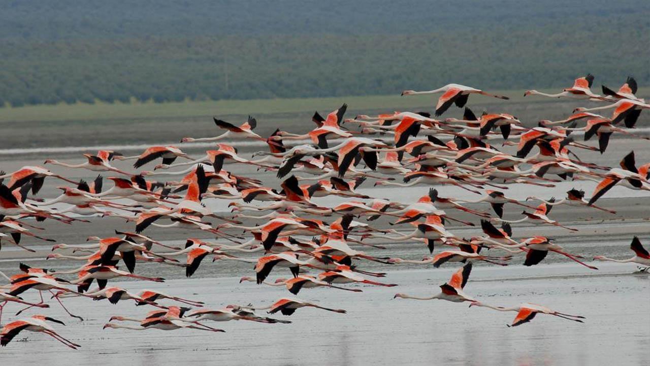 Flamingoes in Fuente de Piedra Lagune Malaga