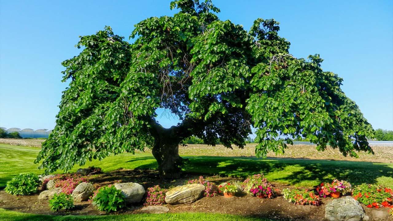 La hermosa nueva vida de los árboles perdidos de El Bierzo