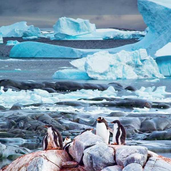 el museo en la antartida
